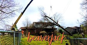 Crane Lifting Tree