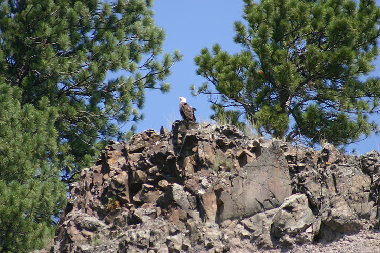 Eagle at End of the Line Lodge, Craig Montana