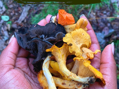 Best Summer Mushrooms to Forage