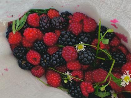 Wild Summer Berry Recipes