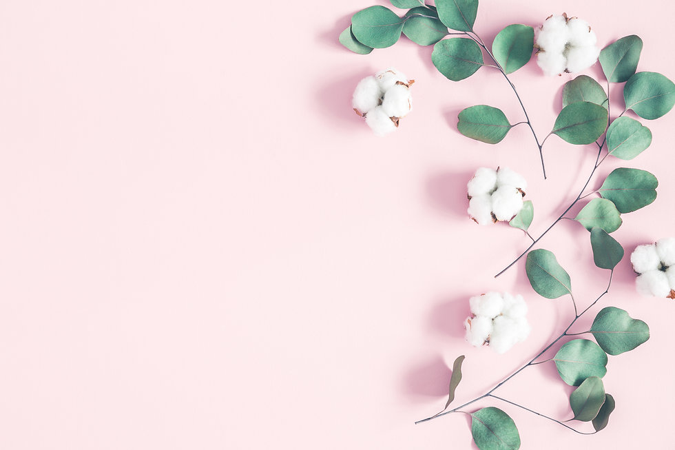 Eucalyptus leaves and cotton flowers on