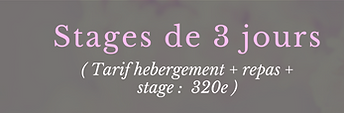 stages et formation.png