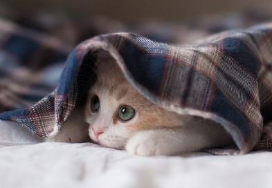 chat-sous-la-couverture-158920.jpg