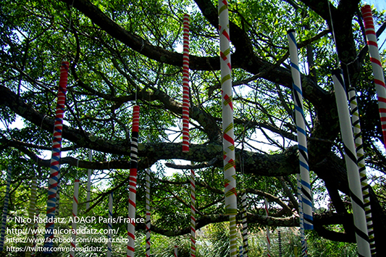 Nico Raddatz / arbre de mai