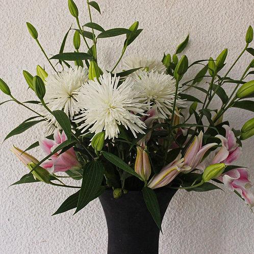Crisantemos spider individuales
