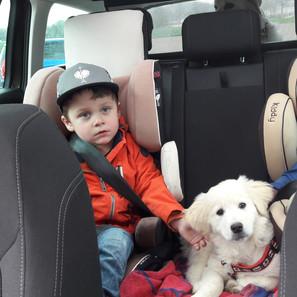 Maschas Lieblingsplatz im Auto als Welpe, jetzt fährt sie im Kofferraum mit