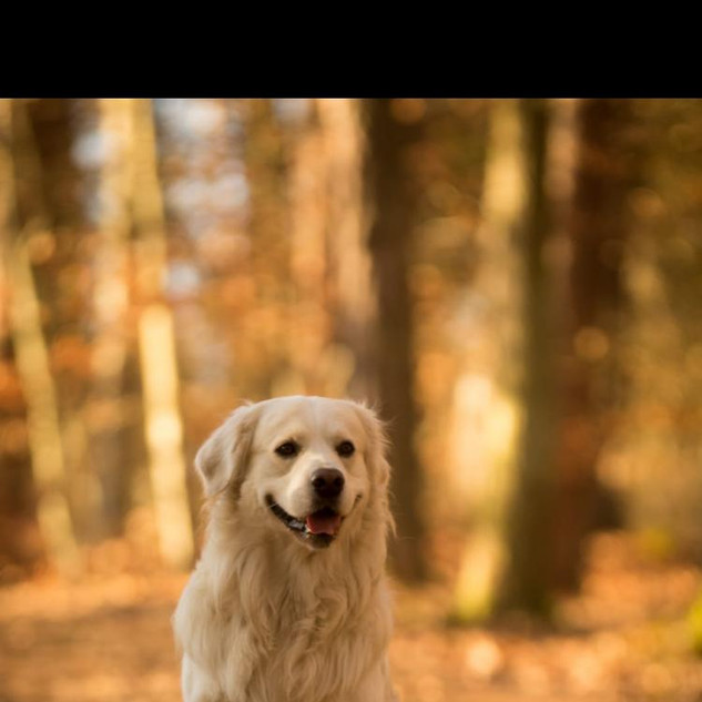 Nanuk (Therapiehund)