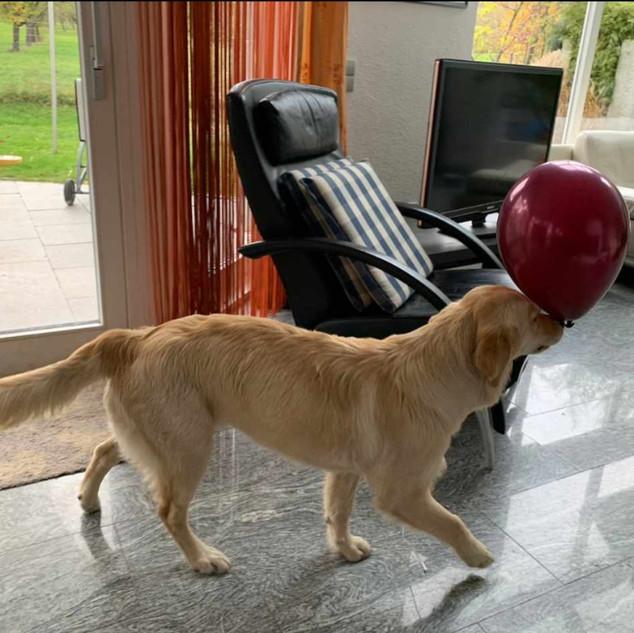 Luna liebt es mit dem Luftballon zu spielen