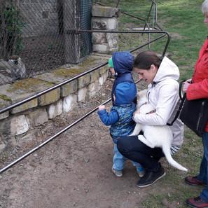 Im Kleintierpark