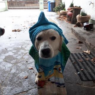 Regenwetter = Sauwetter ;)