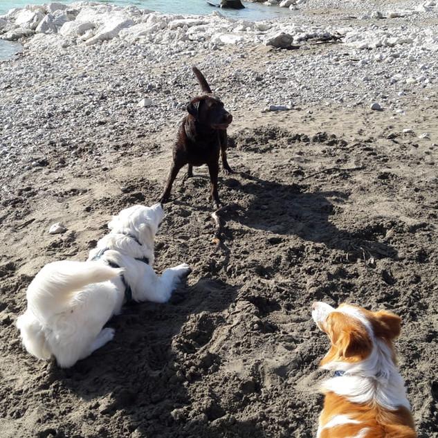 Aaron mit seinen Hundefreunden
