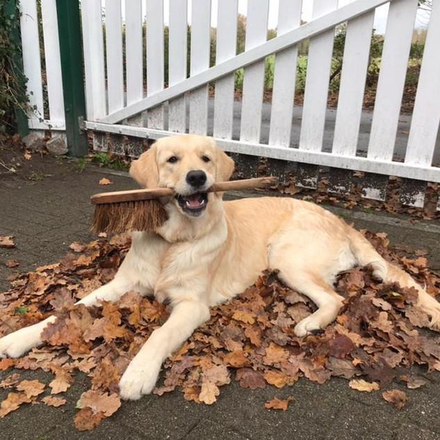 Ava ist jetzt eine richtig schöne Hundedame geworden!