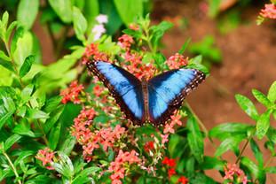 jardin-de-mariposas-selvatura-park-007.j