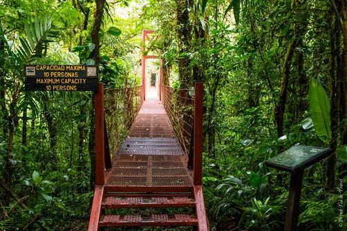 Costa-Rica-Monteverde-0952.jpg