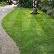 Ah a lawn! 😁 #turf #grass #gardens