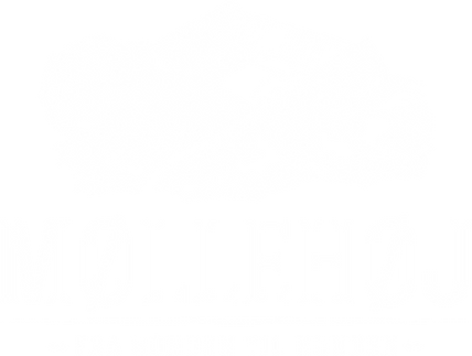 Møllehøj-Logo-main_hvid.png