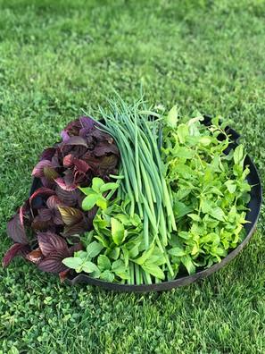 Our fresh grown herbs
