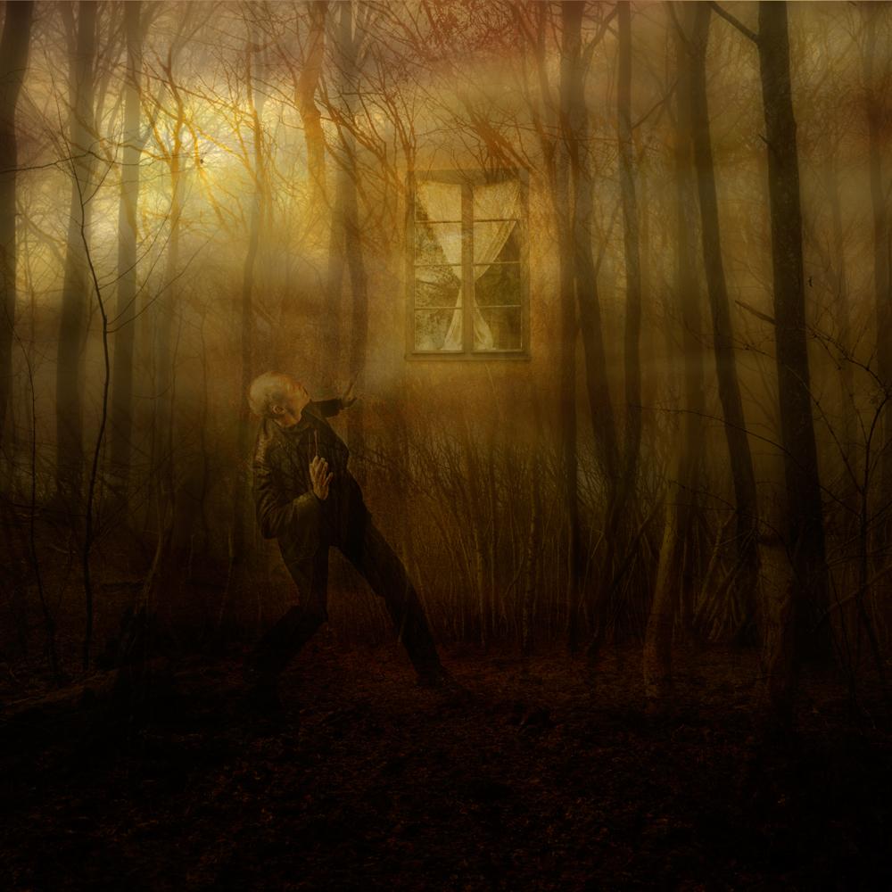 sol-genom-skog,fönster