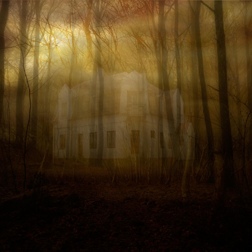 sol-genom-skog,med-hus