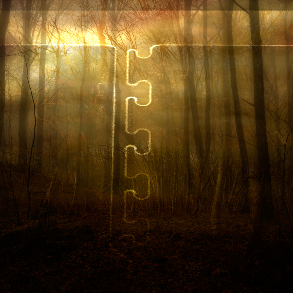 sol-genom-skog,mednått,2