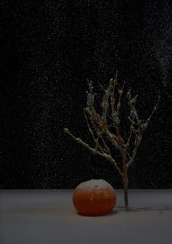 mandarin-vid-träd