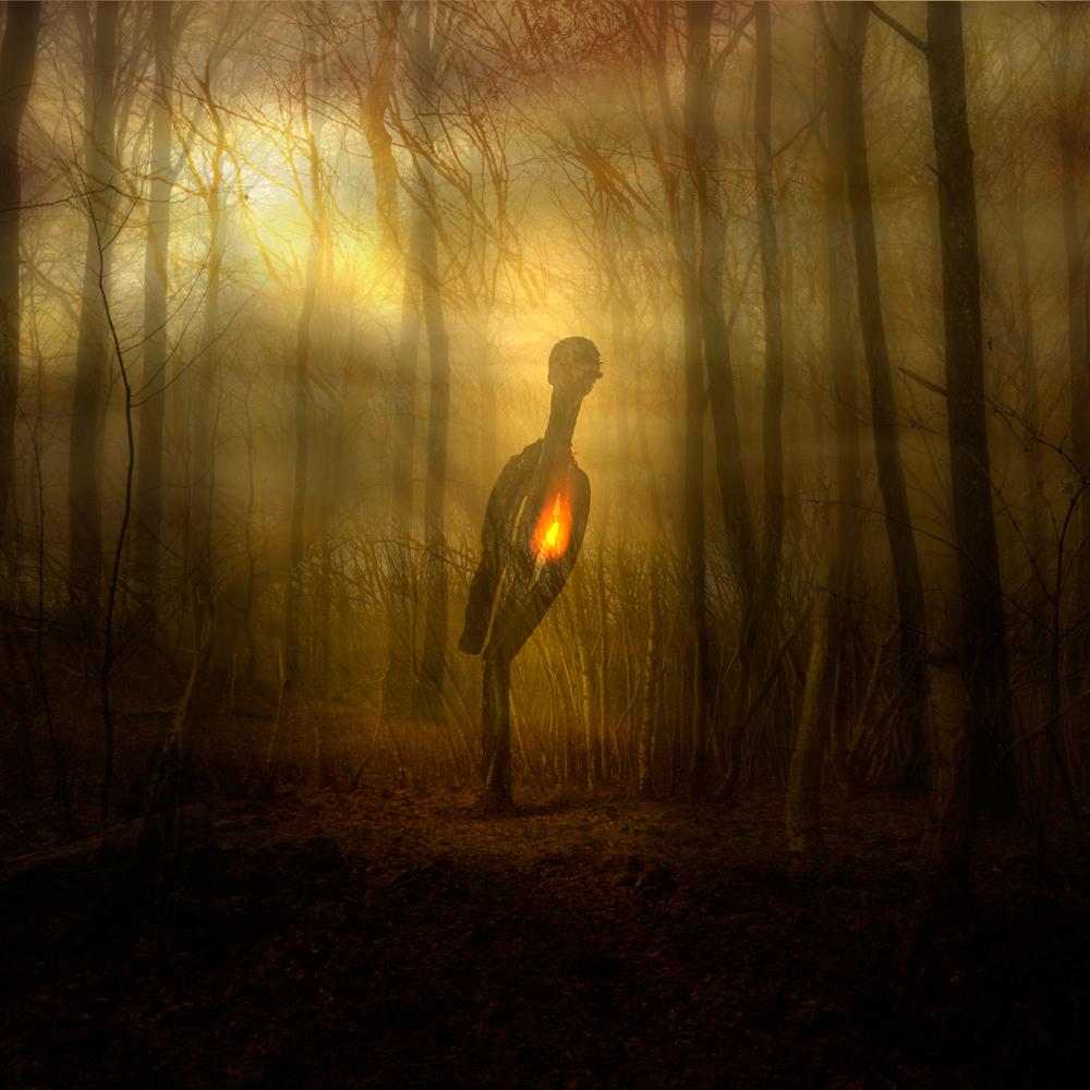 sol-genom-skog,brinn,3