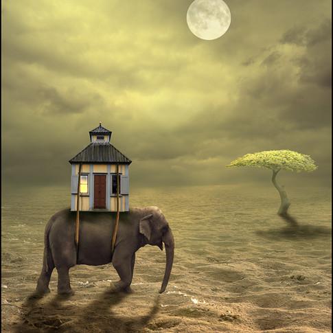 Elefant med hus.