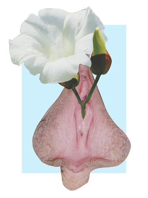 Withe flower II