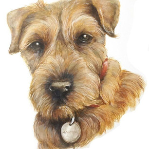 Wire Haired Terrier Pet Portrait