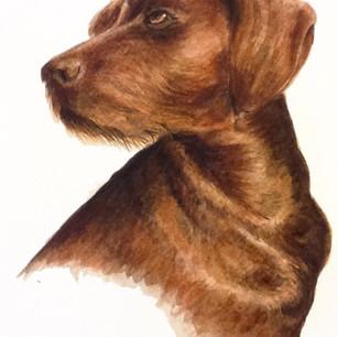 Brown Dog Pet Portrait