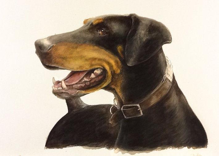 Doberman Portrait.jpg