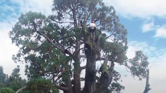 Parrot - Sequoia - User case