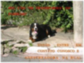Adestramento de cães com clicker uma forma gosta e muito pratica de treinar seu cão e mudar comportamentos indesejados.