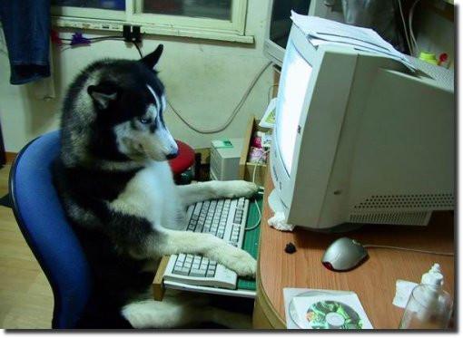 cachorro_lendo_computador_usando_humano_leitor_rusky.jpg