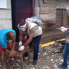 VACUNACIÓN A PERROS Y GATOS EN 7 MUNICIPIOS DE SUCRE