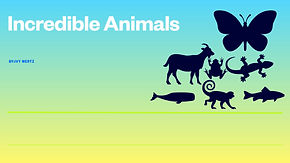 Incredible Animals