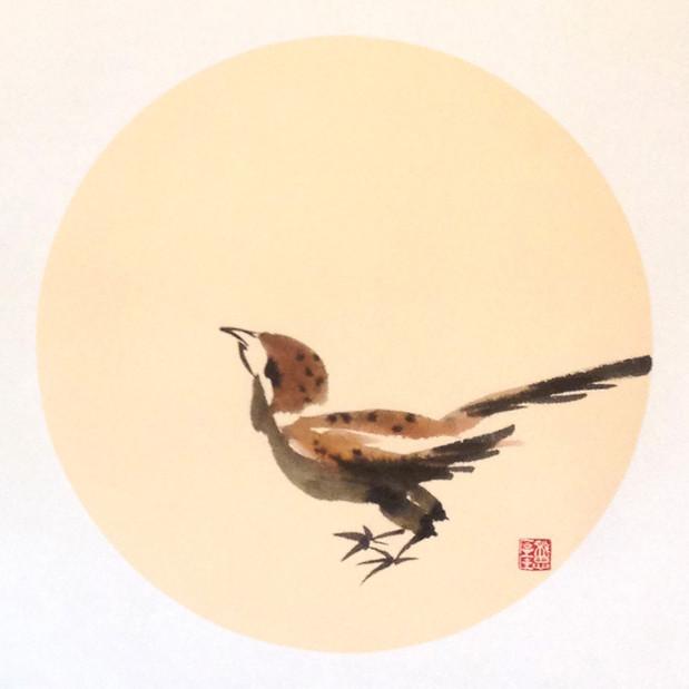 Sparrow15.jpg
