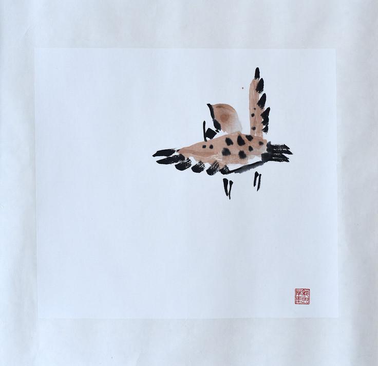 Sparrow10.JPG