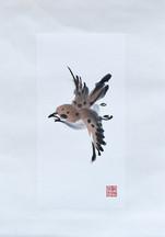 Sparrow08.JPG
