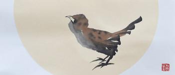 Sparrow05.JPG