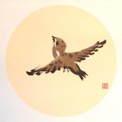 Sparrow13.jpg