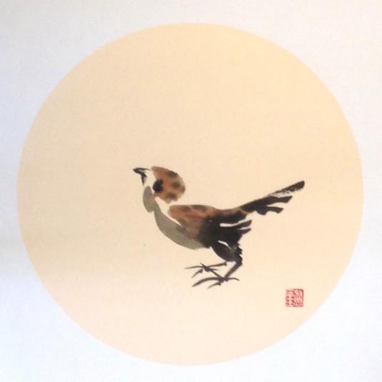 Sparrow12.jpg