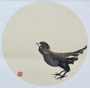 Sparrow03.JPG