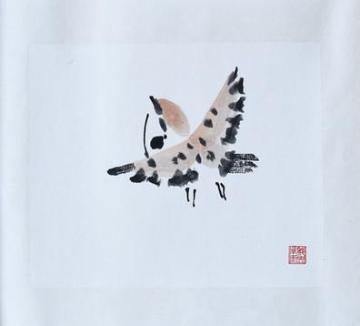Sparrow09.JPG