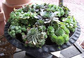 Growing Succulents in Containers