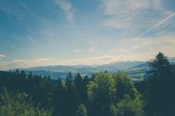 forest-green-hd-wallpaper-129105