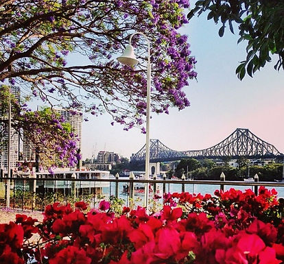 Spring view of Story Bridge.jpg