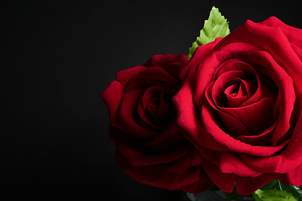 close-up-red-roses-black-background-free