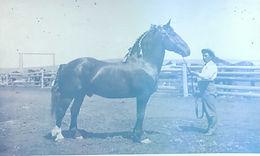 Horse at Waldron Ranch