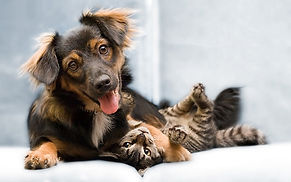 Dogs_Cats_PIC.jpg